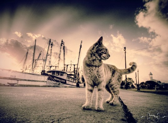 vintage-cats_00407365